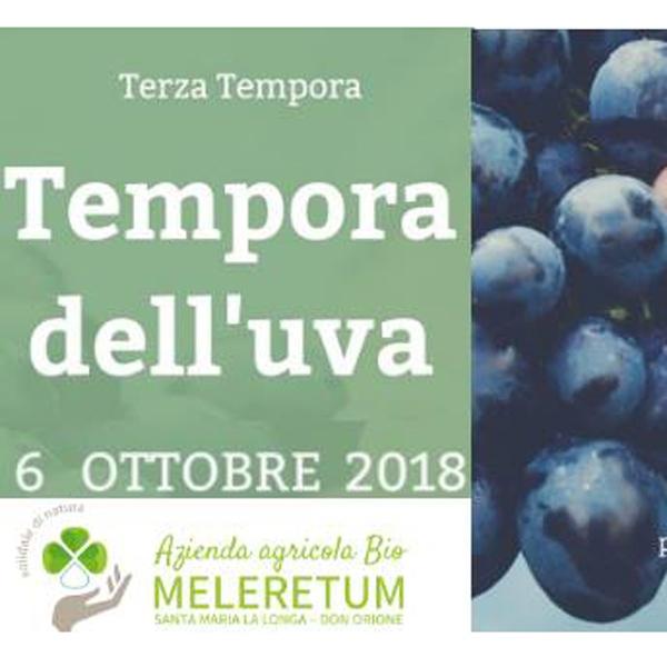 Santa Maria la Longa – La Tempora dell'uva