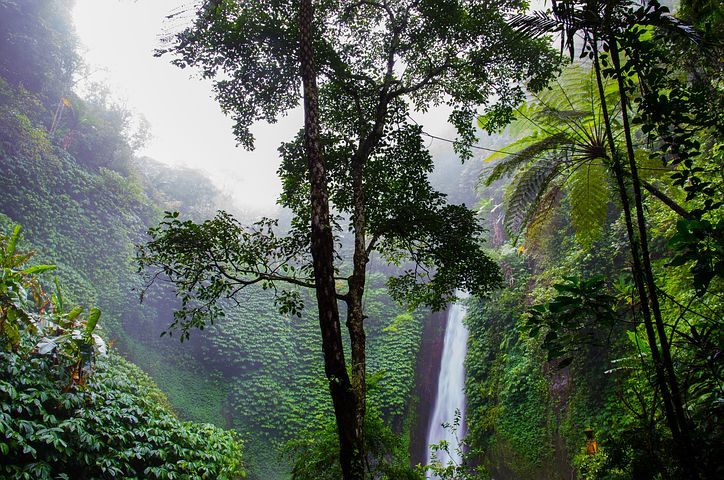 Amazzonia – Nuovi cammini per la Chiesa e per una ecologia integrale