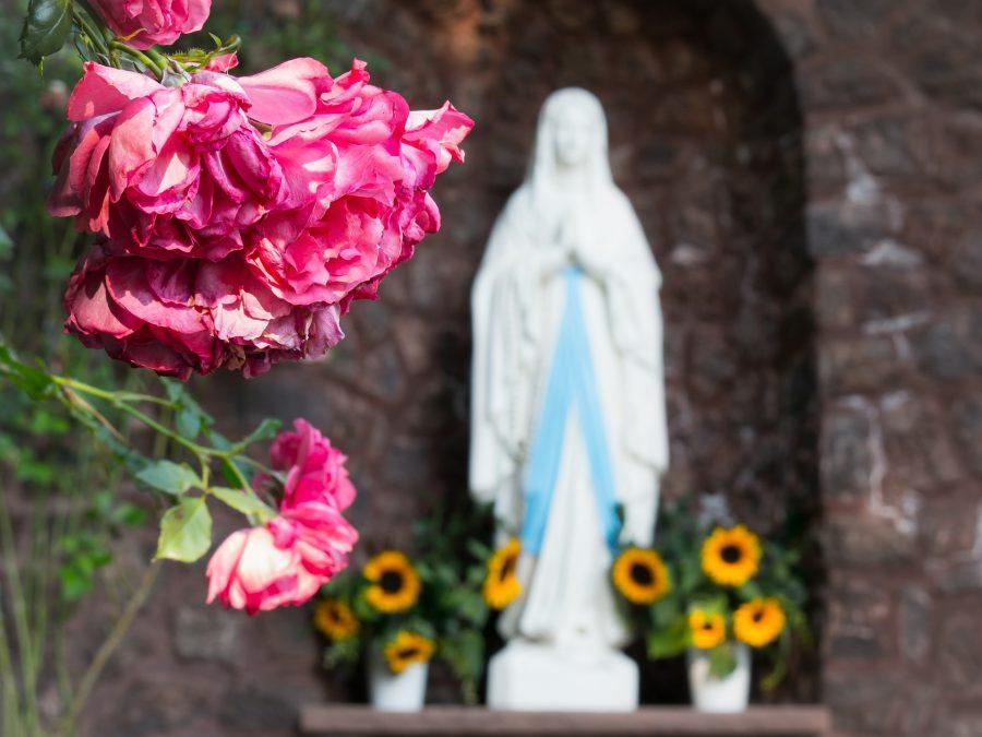 Pontecurone – Quella rosa ancora in fiore